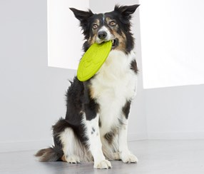 Dog Flying Disc, Yellow Green